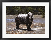 Framed White Rhino