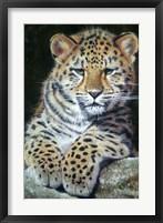 Framed Amur Leopard Cub 2