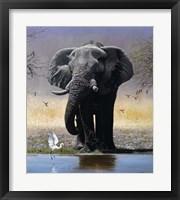 Framed Elephant, Egret And Carmines