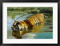 Framed In The Swim