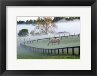 Framed Horses in the Mist #3, Kentucky 08