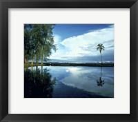 Framed Palm Tree Alone, Big Island, Hawaii