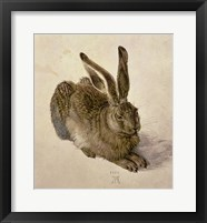 Framed Young Hare, c.1502