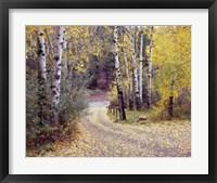 Framed Birch Tree DriveFence & Road, Santa Fe, New Mexico 06
