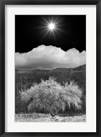 Framed Cottonwood & Sunbeams, Canyon de Chelly, Arizona 10