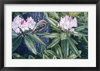 Framed Scarlet Tanager In The Rhodos