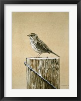 Framed Savannah Sparrow