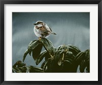 Framed Sparrow On Rhododendron