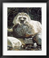 Framed Low Water - Raccoon