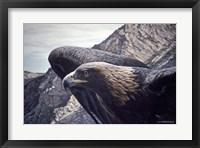 Framed Golden Eagle 2