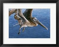 Framed Flying Pelican