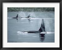 Framed Orcas