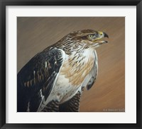 Framed Ferruginous Hawk