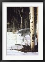 Framed Grey Wolf & Aspen