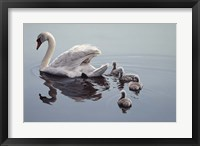 Framed Following Mama