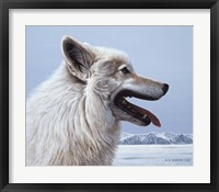 Framed Arctic Wolf Portrait