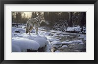 Framed Winter Creek - Coyote