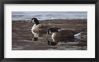 Framed Break In The Ice- Canada Geese