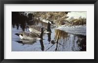 Framed Spring Arrivals- Canada Geese