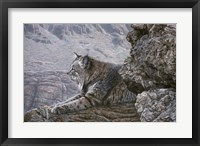 Framed Resting Bobcat