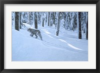 Framed Northern Winter