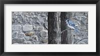 Framed Autumn Blue Jay