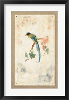 Framed Blue Magpie