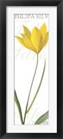 Framed Tulipa Silvestris