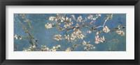 Framed Almond Blossom