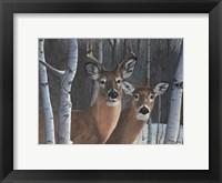 Framed Deer Magic