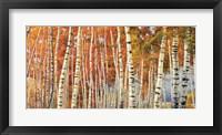 Framed Betulle d'autunno