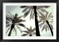Framed Palm Two