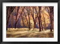 Framed El Capitain Meadow