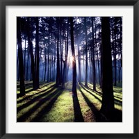 Framed Technicolor Trees 2