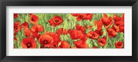 Framed Poppy Field (Detail)