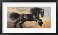 Framed Black Stallion