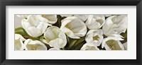 Framed Tulipani Bianchi