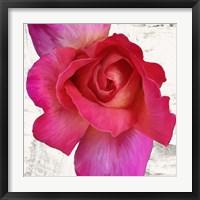 Framed Spring Roses I