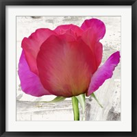 Framed Spring Roses II