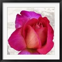 Framed Spring Roses III