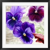 Framed Pansies II
