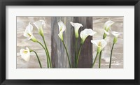 Framed Country Callas