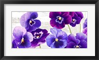 Framed Dance of Pansies