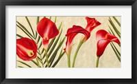 Framed Red Callas