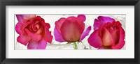 Framed Spring Roses