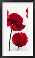 Framed Reds II