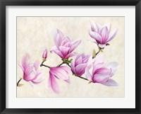 Framed Ramo di Magnolia