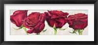 Framed Rose Romantiche