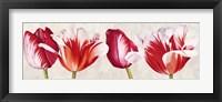 Framed Gioiosi Tulipani