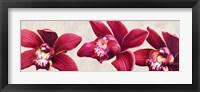 Framed Eleganti Orchidee